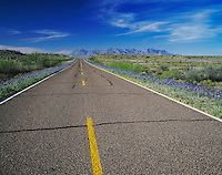 Park Road and Big Bend Bluebonnets, Big Bend National Park,Texas, USA