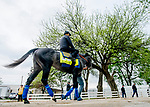 LOUISVILLE, KENTUCKY - APRIL 28: Roadster, trained by Bob Baffert, heads to the track before exercising in preparation for the Kentucky Derby at Churchill Downs in Louisville, Kentucky on April 28, 2019. Scott Serio/Eclipse Sportswire/CSM