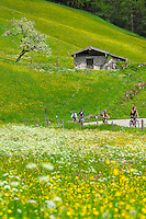 Berchtesgaden, Bavaria, Germany, May 2006. Many wild flowers color the alpine pastures in the spring at lake Hintersee. The beauty of berchtesgadener Land lies in the spectacular mountain landscapes, combined with age old traditions and a welcoming culture. Photo by Frits Meyst/Adventure4ever.com