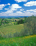 Tuscany, Italy<br /> Olive trees overlook a vineyard on a hilltop near San Gimignano overlooking a valley of cultivated fields and farms