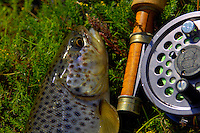 Catch and release trout fishing in Sudursveit Iceland. Brown trout, fly rod and reel.