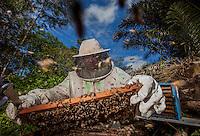 Abelhas Tecnológicas.<br />  <br /> Em Santa Bárbara, no Pará, uma pesquisa desenvolvida por brasileiros e australianos quer saber por que esses insetos estão desaparecendo. Seu sumiço está relacionado com a produção de alimentos em escala global. Para descobrir o motivo do sumiço desses importantes polinizadores, desenvolveram um microsensor menor que um grão de arroz para rastreá-las.<br /> Criado chip  para monitorar desaparecimento de abelhas.<br /> <br /> A população de abelhas registra um expressivo declínio em vários países, inclusive no Brasil, Na busca por respostas que ajudem a combater o problema, o Instituto Tecnológico Vale (ITV), em Belém, no Pará, desenvolveu em colaboração com a Organização de Pesquisa da Comunidade Científica e Industrial (CSIRO), na Austrália.<br /> Santa Bárbara, Pará, Brasil<br /> Foto Carlos Borges<br /> 31/05/2014