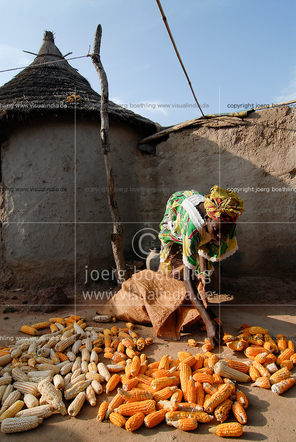 MALI agriculture, maize is planted in crop rotation with cotton, woman with harvested maize in village / MALI Zwischenfrucht Mais als Fruchtwechsel beim Anbau von Biobaumwolle Baumwolle