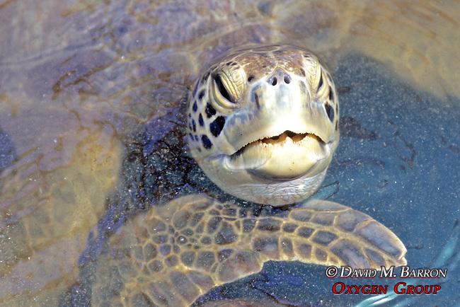 Black Sea Turtle In Tank