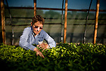 Suzanne Ashworth checks on seedlings in a green house at Dell Rio Botanical in West Sacramento, CA May 3, 2010.