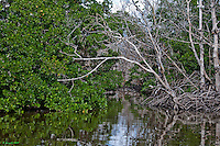 Mangroves Passageway, Florida Everglades National Park, Flamingo Park<br />