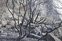 La riserva naturale di Capo Gallo devastata dall'incendio quasi certamente doloso del 16 giugno.<br /> The nature reserve of Capo Gallo In Sicily destroyed by an arson.