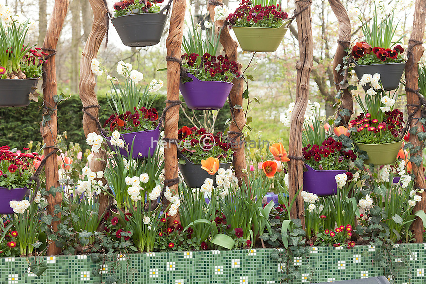Hollande, région des champs de fleurs, Lisse, Keukenhof, pots suspendus avec pensées et paquerettes // Holland, Lisse, Keukenhof, hanging pots with Pansies.