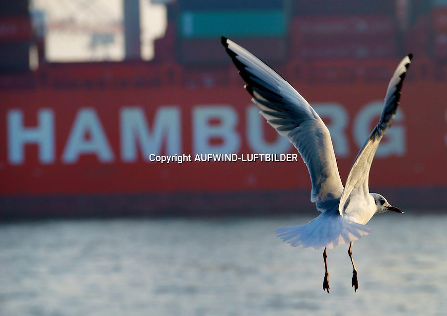 Moewe Fliegt Auf Hamburg Aufwind Luftbilderphotosheltercom