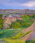 Badlands National Park, SD  <br /> Bands of pastel summer hills and cliffs with yellow sweet clover (Melilotus officinalis) in the spring washes