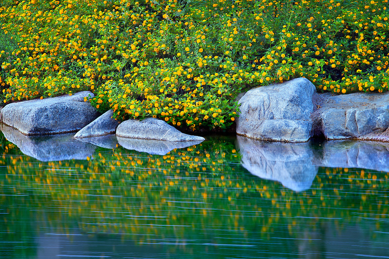 Garden stream with rocks and flowers. Palm Desert, California