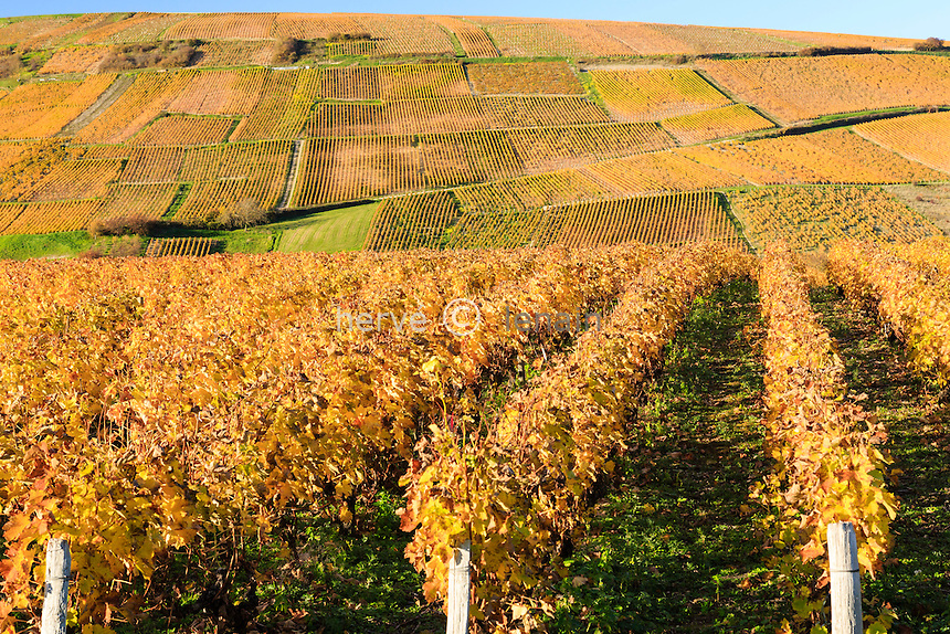 France, Cher (18), région du Sancerrois, Sancerre, village de Chavignol, le vignoble en automne // France, Cher, Sancerrois region, Sancerre, Chavignol, the vineyard fall