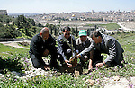 "Sheikh Raed Salah and other Palestinians plant olive trees at the Mount of Olives, in East Jerusalem to mark the Land Day on March 30,2011, as hundreds of people across Israel and Palestinian territories were holding a series of rallies marking ""Land Day,"" recalling an incident in 1976 when Israeli troops shot and killed six people during protests against land confiscations. Photo by Mahfouz Abu Turk ."
