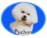 Bichon Frise This design is offered on gift merchandise ONLY.<br />