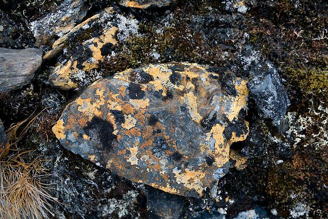 Rock covered in black and Orange lichen, including the vivid elegant Orange. Spitsbergen