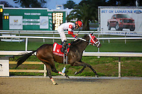 January 17, 2015: :International Star ridden by Miguel Mena wins the Lecomte Stakes at the New Orleans Fairgrounds course. Steve Dalmado/ESW/CSM