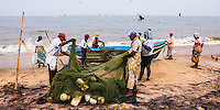 Negombo fish market (Lellama fish market), panoramic photo of fishermen emptying their fishing nets, Negombo, West Coast of Sri Lanka, Asia. This is a panoramic photo of fishermen emptying their fishing nets at Negombo fish market (Lellama fish market), Negombo, West Coast of Sri Lanka, Asia.