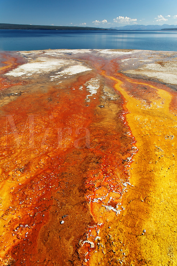 Red and yellow bacteria in geyser outflow stream flowing into Yellowstone Lake, West Thumb Geyser Basin, Yellowstone National Park, Wyoming, USA