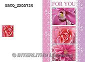 Alfredo, FLOWERS, BLUMEN, FLORES,  photos+++++,BRTOXX02736,#F#