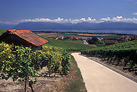 Switzerland, La Cote, Vaud, Lake Geneva, A small paved road leads through the scenic countryside covered with vineyards along Lac Leman in the Canton of Vaud. Scenic view of the Alps across Lake Geneva.