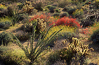 Glorieta Canyon, Anzo-Borrego Desert State Park