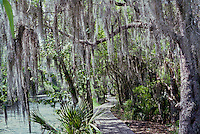 A wooden trail winds through the bayous in Jean LaFitte National Park, Louisiana.