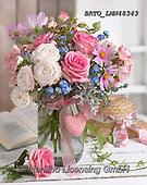 Alfredo, FLOWERS, BLUMEN, FLORES, photos+++++,BRTOLMN48343,#f#, EVERYDAY