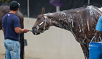 Palace Malice, trained by Todd Pletcher, gets a bath after working out in preparation for the Kentucky Derby at Churchill Downs on April 29, 2013.