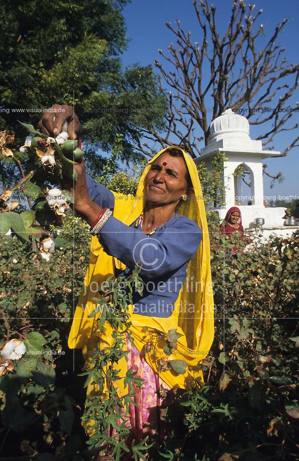 INDIA, Rajasthan, Tilonia, woman in yellow sari at cotton harvest /  INDIEN Rajasthan, Frau im gelben Sari bei Baumwollernte im Feld