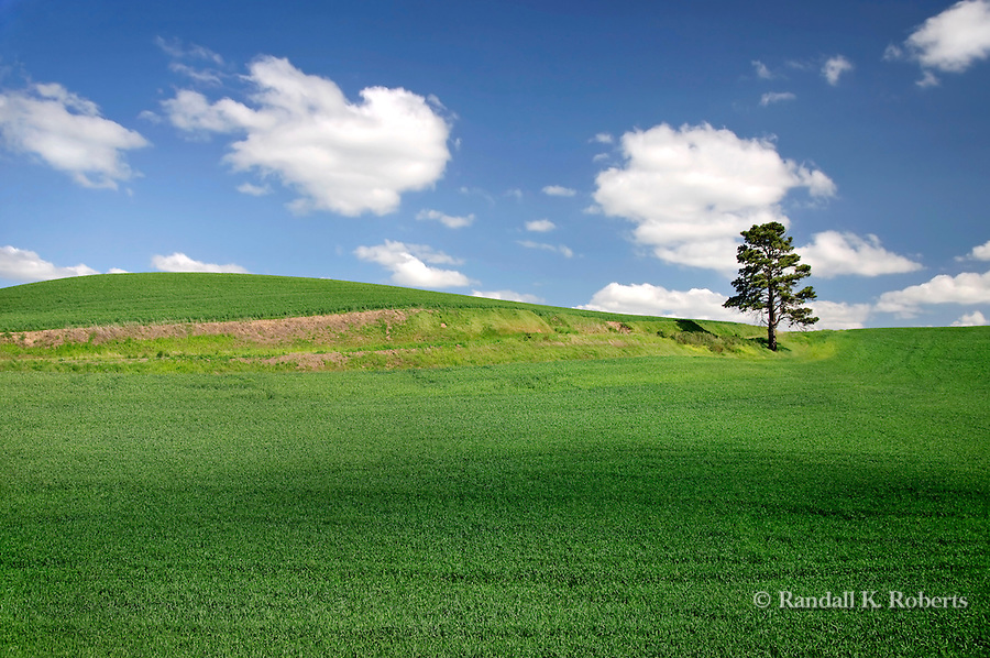 A lone tree dots the rolling hills of the Palouse region of Eastern Washington.