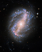 Washington, DC - September 9, 2009 -- This image of barred spiral galaxy NGC 6217 is the first image of a celestial object taken with the newly repaired Advanced Camera for Surveys (ACS) aboard the National Aeronautics and Space Administration's (NASA) Hubble Space Telescope. The camera was restored to operation during the STS-125 servicing mission in May to upgrade Hubble.  The barred spiral galaxy NGC 6217 was photographed on June 13 and July 8, 2009, as part of the initial testing and calibration of Hubble's ACS.  The galaxy lies 6 million light-years away in the north circumpolar constellation Ursa Major..Credit: NASA, ESA, and the Hubble SM4 ERO Team via CNP