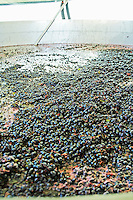 fermenting must and grapes aragones grapes quinta do mouro alentejo portugal