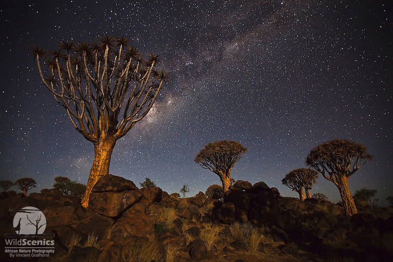 Quiver trees (Aloe dichotoma) and the Milky Way.<br /> (International Photography Awards (IPA) 2011, 3rd Place in Landscape Category<br /> FujiFilm/Getaway Awards 2010, Certificate in the Landscapes &amp; Plants Category.)