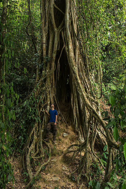 Strangler fig species  in the primary rainforest area of the Xishuangbanna Tropical Botanic Gardens