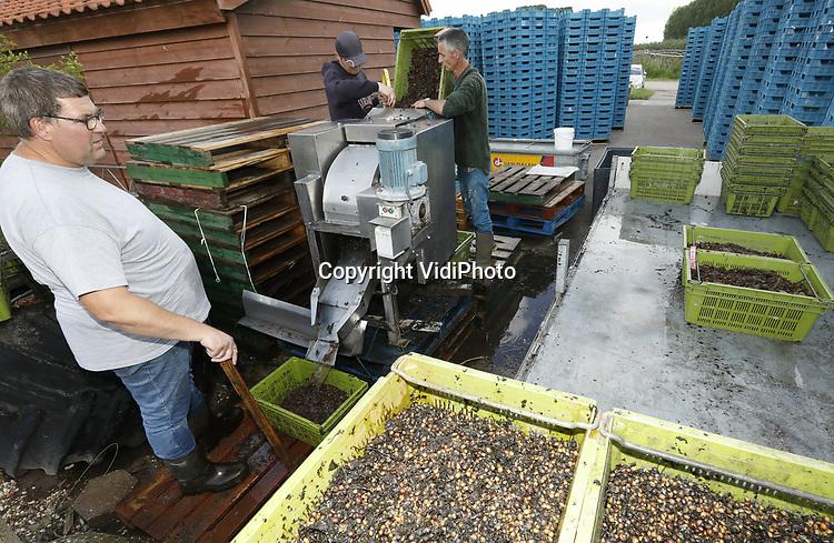 Foto: VidiPhoto<br /> <br /> SLIJK-EWIJK &ndash; Een pittig klusje voor de manen van Staatsbosbeheer donderdag in Slijk-Ewijk. Een kleine 3 ton wilde kersen (prunus avium of boskriek) van de zogenoemde zaadgaard in Zeewolde worden in de Betuwe bij B&amp;B Fruit van het vruchtvlees ontdaan met een (ont)pitmachine, waarna zo&rsquo;n 100 kilo pitten overblijven. De pitten vormen het uitgangsmateriaal voor boomkwekers en leveren Staatsbosbeheer ongeveer 150 euro per kilo op. De wilde kersen van de 500 prunussen worden machinaal geschud; alleen de pit is belangrijk. Prunussen leveren niet alleen hoogwaardig en kostbaar hout, maar zijn ook ecologisch belangrijk en worden daarom veel aangeplant aan de randen van bossen. Het verkopen van de superpitten aan boomkwekers zorgt er voor dat er voor Staatsbosbeheer en andere natuurbeheers altijd voldoende voorraad aan nieuw plantmateriaal beschikbaar is. B&amp;B in Slijk-Ewijk is een van de weinige fruitbedrijven in Nederland met een pitmachine.