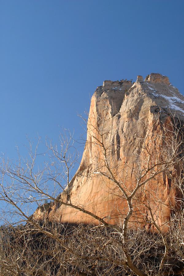 Cliffs of Abraham Mountain above cottonwood trees, Zion National Park, Washington County, UT
