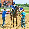 Calypso Run winning at Delaware Park on 8/29/15