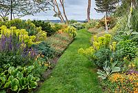 Indianola, WA: Grass pathway through summer perennial garden featuring salvia, euphorbai and helianthemum