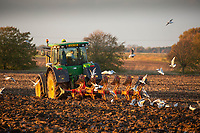 Ploughing in the Lincolnshire fens<br /> &copy;Tim Scrivener Photographer 07850 303986<br />      ....Covering Agriculture In The UK....