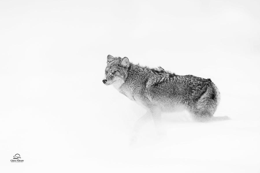 Yellowstone Winter Wonderland
