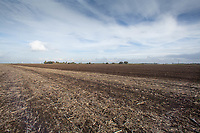 Fenland farm land<br /> &copy;Tim Scrivener Photographer 07850 303986<br />      ....Covering Agriculture In The UK....