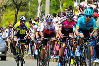 MEDELLIN - COLOMBIA, 15-02-2019: Grupo de escapados durante la cuarta etapa del Tour Colombia 2.1 2019 con un recorrido de 144 Km, que se corrió con salida y llegada en el estadio Atanasio Girardot de la ciudad de Medellín. / Group of riders during the four stage of 144 km of Tour Colombia 2.1 2019 that ran with start and arrival in Atanasio Girardot stadium in Medellin city.  Photo: VizzorImage / Anderson Bonilla / Cont