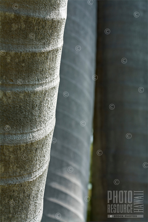 Texture on gray palm tree trunks