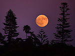 LEUCADIA MOONRISE