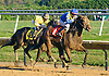 Code Name Raven winning at Delaware Park on 10/15/16