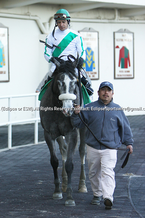 2011 03 19: Quantum Miss and Cornelio Velasquez return from winning the Grade 3 Cicada Stakes, for 3-year old fillies at 6 furlongs, on the inner dirt track, Aqueduct Racetrack, Jamaica, NY. Trainer Anthony Dutrow. Owner Daniel M. Ryan