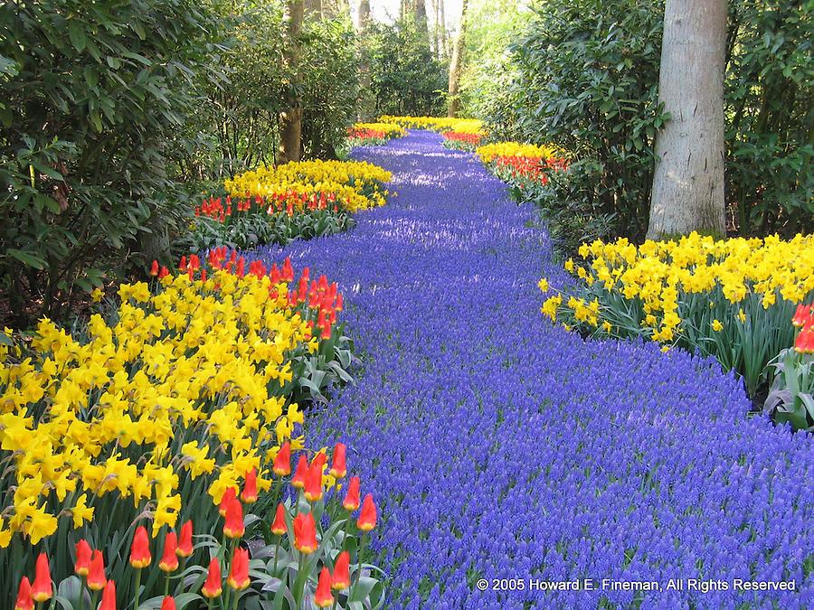 Carpet of Flowers, Keukenof Gardens