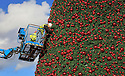 10/11/12 ..Photo shows: High up in a cherry-picker, the finishing touches are made to the tree. ..<br />