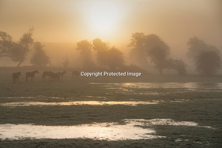28/10/19<br /> <br /> After the coldest autumn night of the season, horses are illuminated by a misty sunrise as they cross frozen flooded fields near Wollerton, Shropshire. <br /> <br /> All Rights Reserved: F Stop Press Ltd.  <br /> +44 (0)7765 242650 www.fstoppress.com