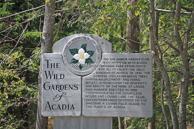 The Wild Gardens of Acadia in the Spring, Acadia National Park, Maine, USA